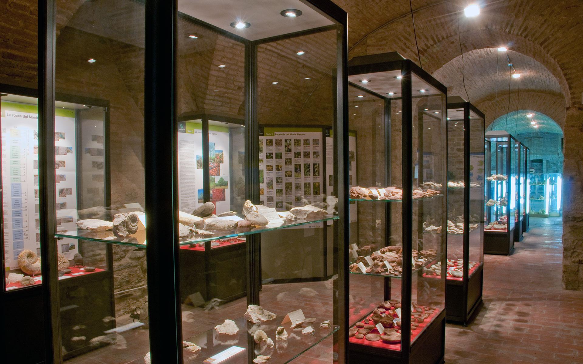 Museo dei Fossili e Minerali del Monte Nerone